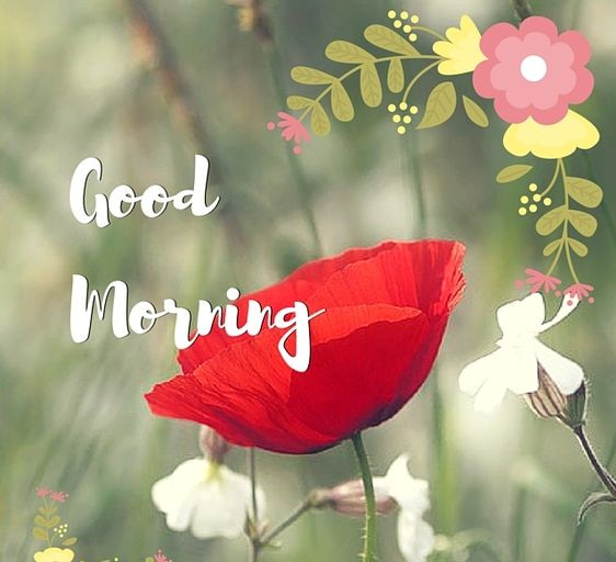77 best good morning images pics collection best whatsapp status